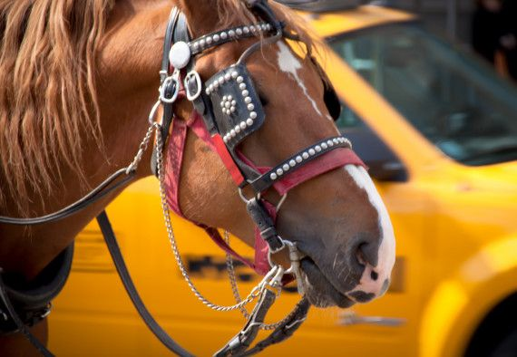 "Say ""Neigh"" to the New York City Horse Carriage Ban"